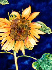 175 - Sunflower With Blue Sky