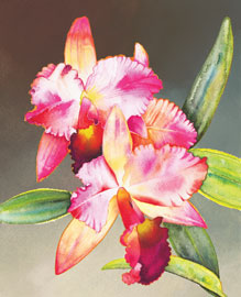 190 - Orchid I