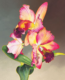 191 - Orchid II