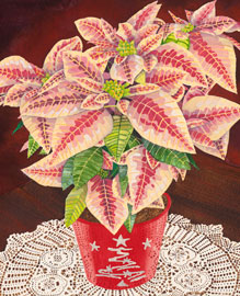 201 - Pink Poinsettias in Red Pot