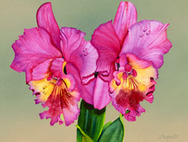 206 - Fresh Pink Orchid