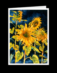 FL04_176-Sunflowers With Blue Sky